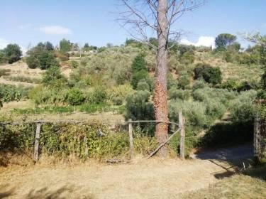 Terreno agricolo in Vendita a Nazzano